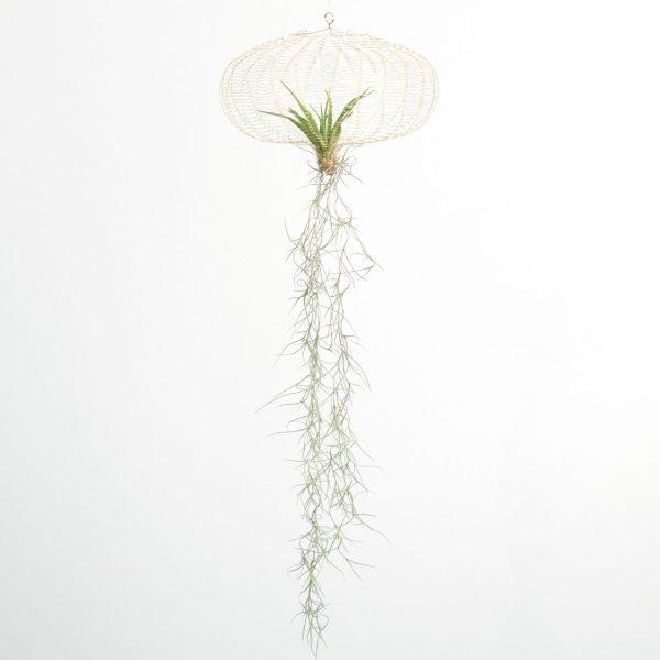 Airplanting Brass medium | Carolijn Slottje