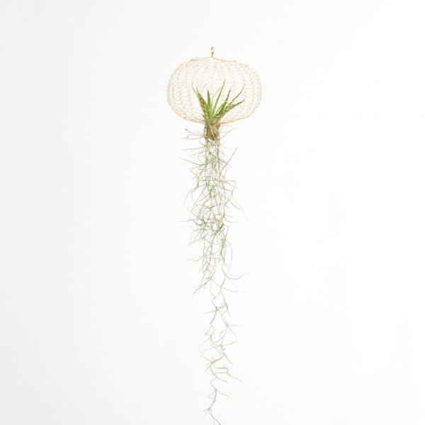 Airplanting Brass small | Carolijn Slottje